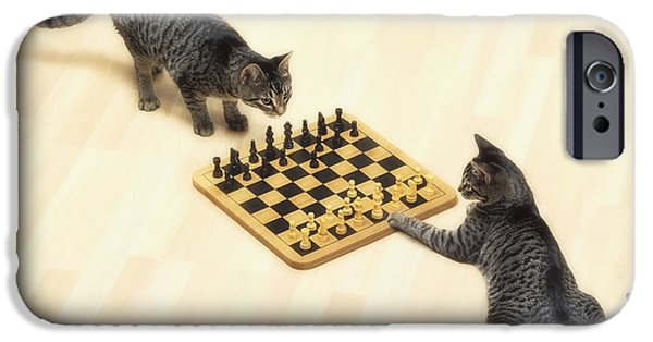 Chess Players iPhone Cases - Two Grey Tabby Cats Playing iPhone Case by Thomas Kitchin & Victoria Hurst