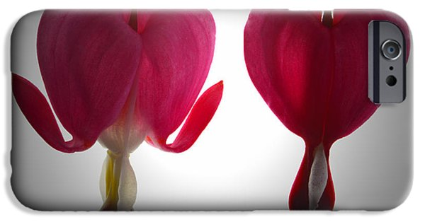 Bleeding Hearts iPhone Cases - Two Hearts. iPhone Case by Terence Davis