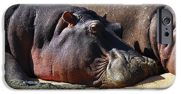 Sleep iPhone Cases - Two Hippos sleeping on riverbank iPhone Case by Johan Swanepoel