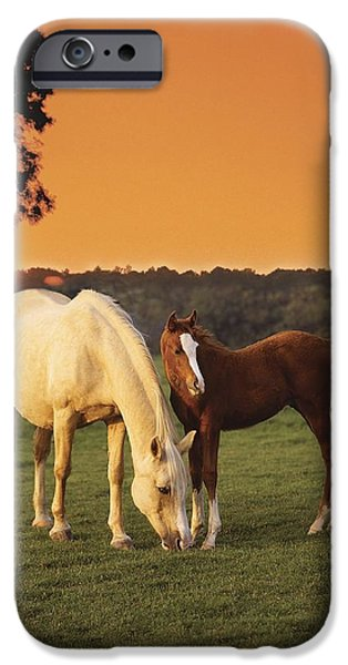 Animals Photographs iPhone Cases - Two Horses And Sunset iPhone Case by Greg Cuddiford