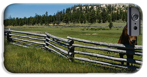 Pet Photography iPhone Cases - Two Horses In A Field, Arizona, Usa iPhone Case by Panoramic Images