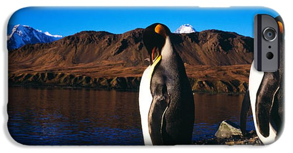 Sea Birds iPhone Cases - Two King Penguins Aptenodytes iPhone Case by Panoramic Images