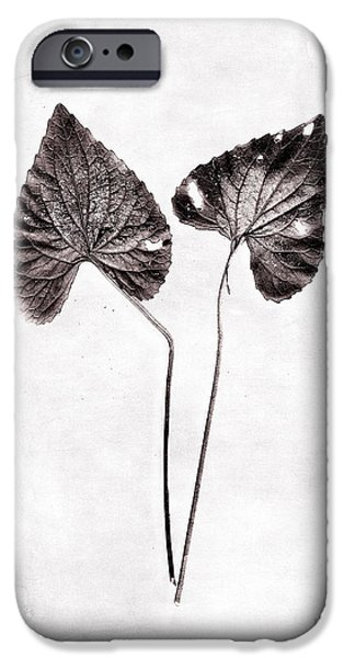 Two Little Violet Leaves iPhone Case by Louise Kumpf