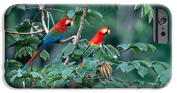Recently Sold -  - Raining iPhone Cases - Two Macaws iPhone Case by Art Wolfe
