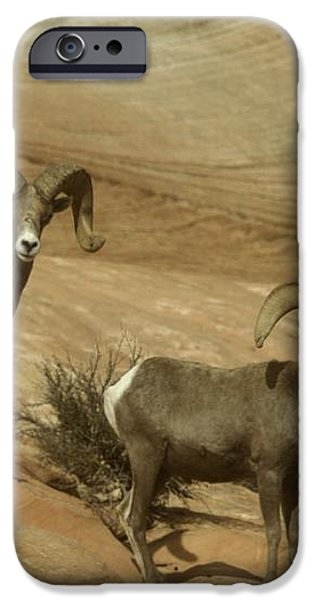 TWO MALE RAMS AT ZION iPhone Case by Jeff  Swan