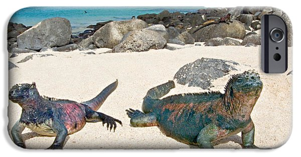 Iguana iPhone Cases - Two Marine Iguanas Amblyrhynchus iPhone Case by Panoramic Images