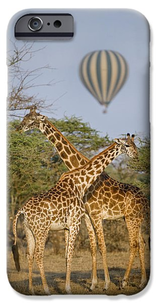 Hot Air Balloon iPhone Cases - Two Masai Giraffes Giraffa iPhone Case by Panoramic Images