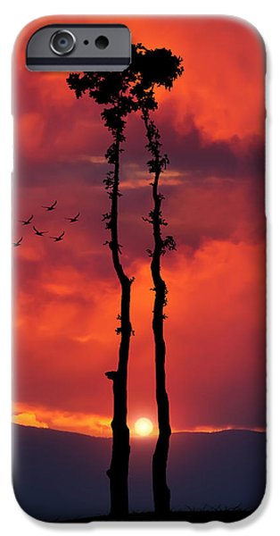 Amazing Sunset iPhone Cases - Two Oaks together in the field at sunset iPhone Case by Bess Hamiti
