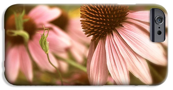 Cone Flower iPhone Cases - Two of a Kind iPhone Case by Jessica Jenney