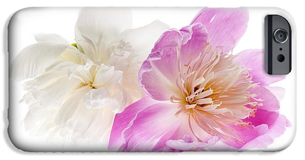 Pastel iPhone Cases - Two peony flowers iPhone Case by Elena Elisseeva