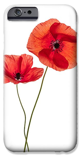 Cutout Photographs iPhone Cases - Two poppy flowers iPhone Case by Elena Elisseeva
