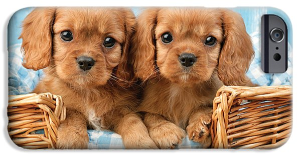 Cavalier iPhone Cases - Two Puppies in Woven Basket DP709 iPhone Case by Greg Cuddiford
