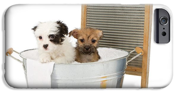 Bathing iPhone Cases - Two puppies taking a bath iPhone Case by Susan  Schmitz
