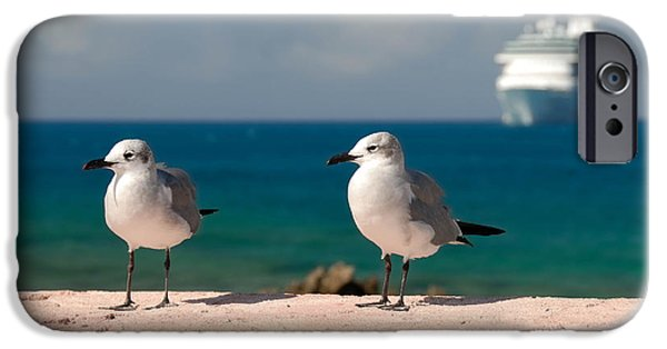 Private Island iPhone Cases - Two Seagulls and Cruise Ship iPhone Case by Amy Cicconi