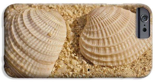 Nature Study iPhone Cases - Two Shells iPhone Case by Adam Romanowicz