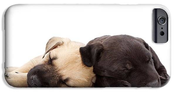 Black Dog iPhone Cases - Two sleeping puppies laying together  iPhone Case by Susan  Schmitz