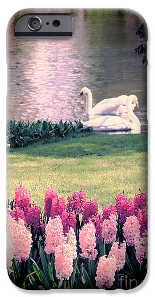 Swan iPhone Cases - Two Swans iPhone Case by Jasna Buncic