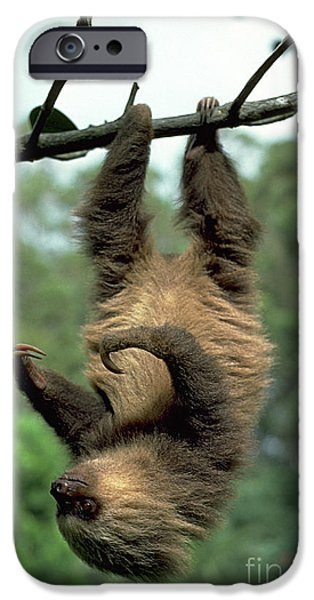 Sloth iPhone Cases - Two-toed Sloth Juvenile iPhone Case by Gregory G. Dimijian, M.D.