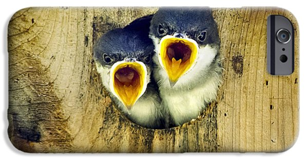Swallow Chicks iPhone Cases - Two Tree Swallow Chicks iPhone Case by Christina Rollo