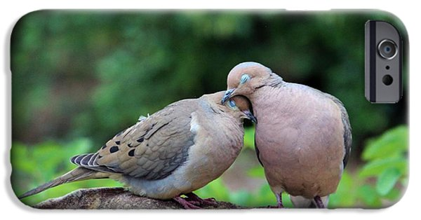 Baby Bird iPhone Cases - Two Turtle Doves iPhone Case by Cynthia Guinn