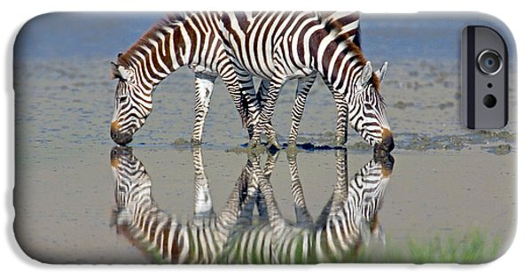 Animal Themes iPhone Cases - Two Zebras Drinking Water From A Lake iPhone Case by Panoramic Images