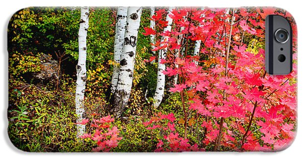 Autumn Trees iPhone Cases - Uinta Colors iPhone Case by Chad Dutson