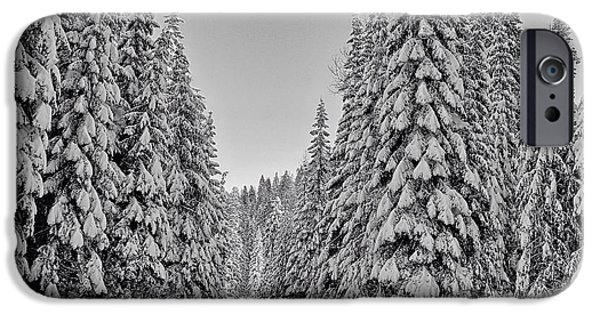 Pines iPhone Cases - Umatilla Forest trail in black and white iPhone Case by Lynn Hopwood