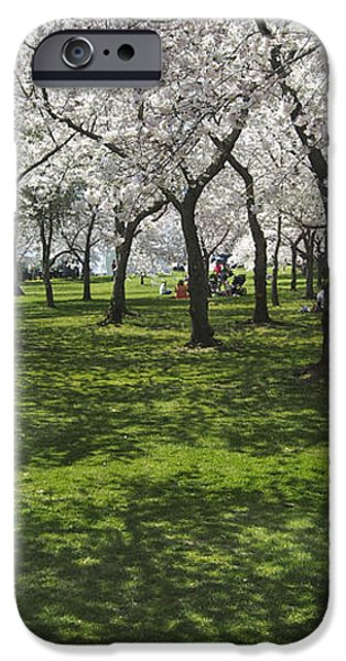 Under the Cherry Blossoms - Washington DC. iPhone Case by Mike McGlothlen