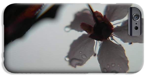 Floral Photographs iPhone Cases - Underside Of A Wet Flower iPhone Case by Jeff  Swan