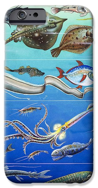 Ocean Drawings iPhone Cases - Underwater Creatures Montage iPhone Case by English School