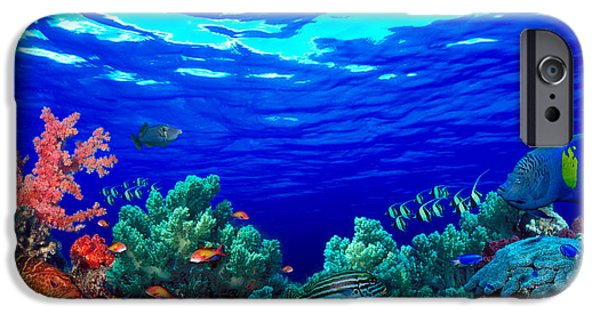 Animal Themes iPhone Cases - Underwater View Of Pallid Triggerfish iPhone Case by Panoramic Images