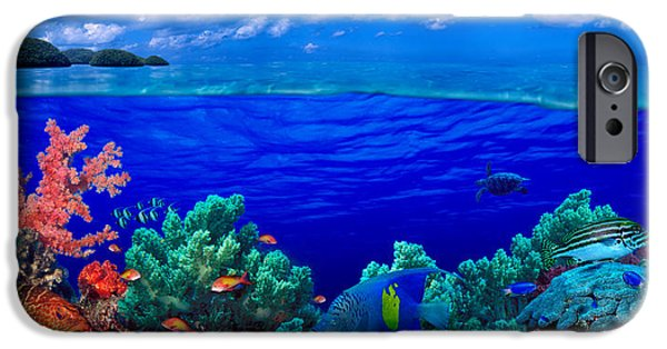 The Tiger iPhone Cases - Underwater View Of Yellowbar Angelfish iPhone Case by Panoramic Images