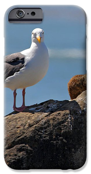 Unlikely Friends by Diana Sainz iPhone Case by Diana Sainz