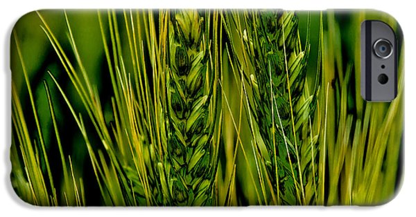 Surreal Landscape iPhone Cases - Unripened Wheat in the Palouse iPhone Case by David Patterson