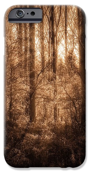 Forest iPhone Cases - Light Trough The Forest iPhone Case by Wim Lanclus