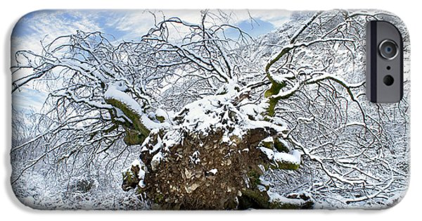 Tree Roots iPhone Cases - Uproot Tree In Snow Due Hurricane iPhone Case by Mikel Martinez de Osaba