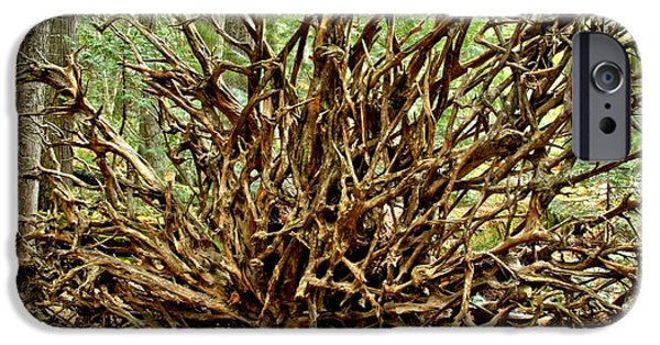 Tree Roots iPhone Cases - Uprooted iPhone Case by Adam Jewell