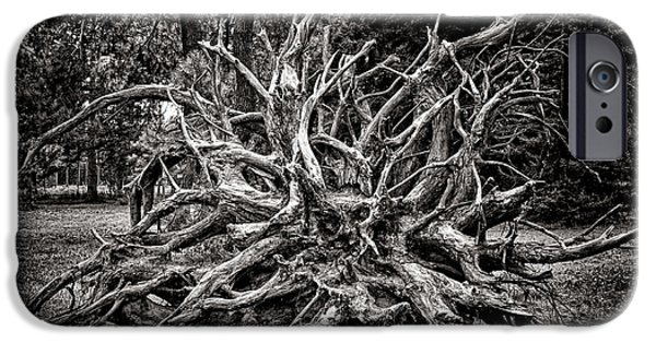 Tree Roots iPhone Cases - Uprooted iPhone Case by Olivier Le Queinec