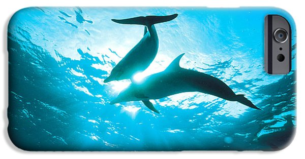 Under Water. Nature iPhone Cases - Upward View Of Two Silhouetted Dolphins iPhone Case by Panoramic Images