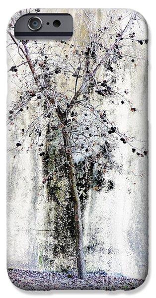 Twiggy iPhone Cases - Urban Oak Tree iPhone Case by Pamela Patch