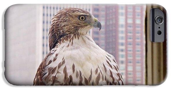 Red iPhone Cases - Urban Red-tailed Hawk iPhone Case by Rona Black
