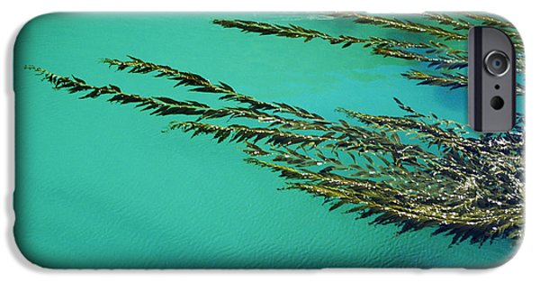 Nature Abstracts iPhone Cases - Usa, California, Seaweed Floating iPhone Case by Larry Dale Gordon