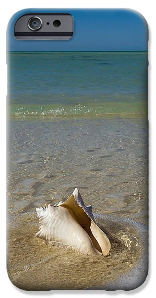 Exoticism iPhone Cases - Usa, Florida, Florida Keys, Conch Shell iPhone Case by Chris Parker