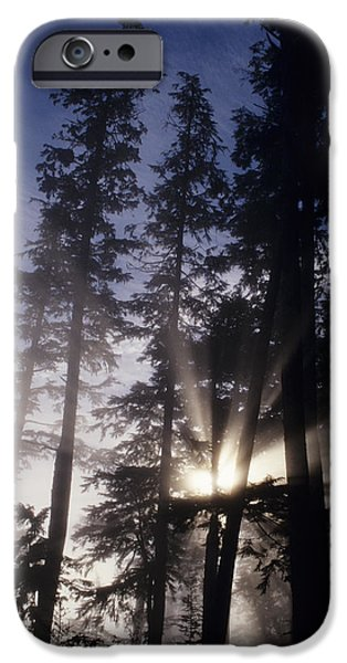 State Parks In Oregon iPhone Cases - Usa, Oregon, Sunlight Filtering Through iPhone Case by Greg Vaughn