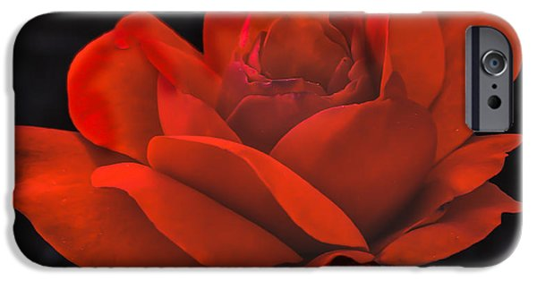 Haybale iPhone Cases - Valentine Rose iPhone Case by Robert Bales