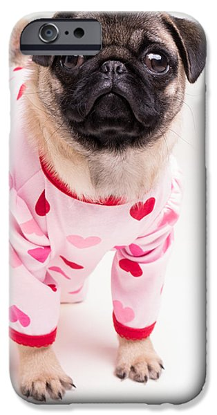 Puppies iPhone Cases - Valentines Day - Adorable Pug Puppy in Pajamas iPhone Case by Edward Fielding