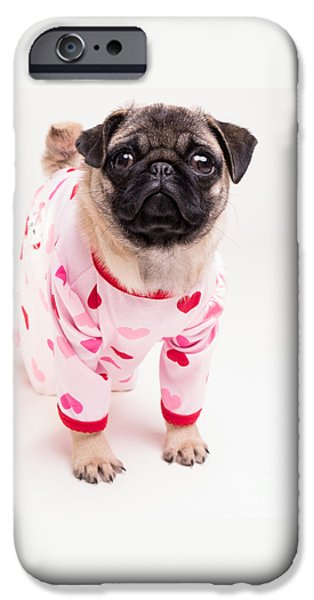 Recently Sold -  - Cute Puppy iPhone Cases - Valentines Day - Adorable Pug Puppy in Pajamas iPhone Case by Edward Fielding