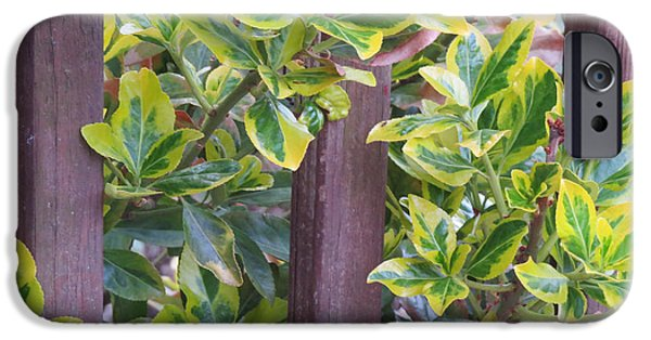 Llmartin iPhone Cases - Variegated 2 iPhone Case by Linda L Martin