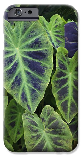 Elephants iPhone Cases - Variegated Elephant Ears iPhone Case by Suzanne Gaff