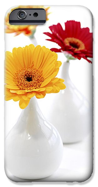 Vase iPhone Cases - Vases with Gerbera flowers iPhone Case by Elena Elisseeva
